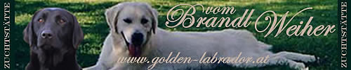 www.golden-labrador.at